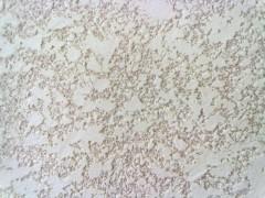 textura casa